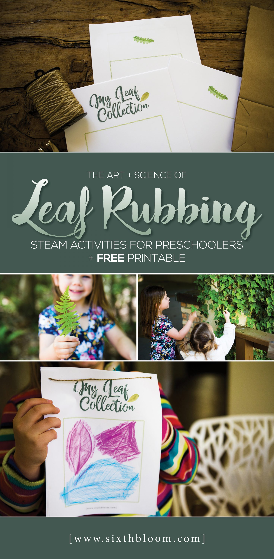 Leaf Rubbing Science Amp Art