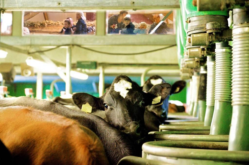 low-sizergh-farm-milk