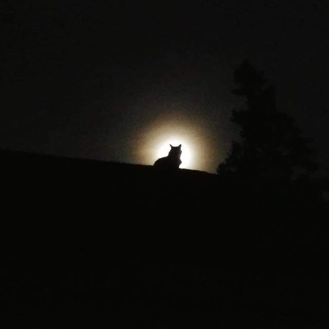 I See A Little Silhouetto Of A Cat