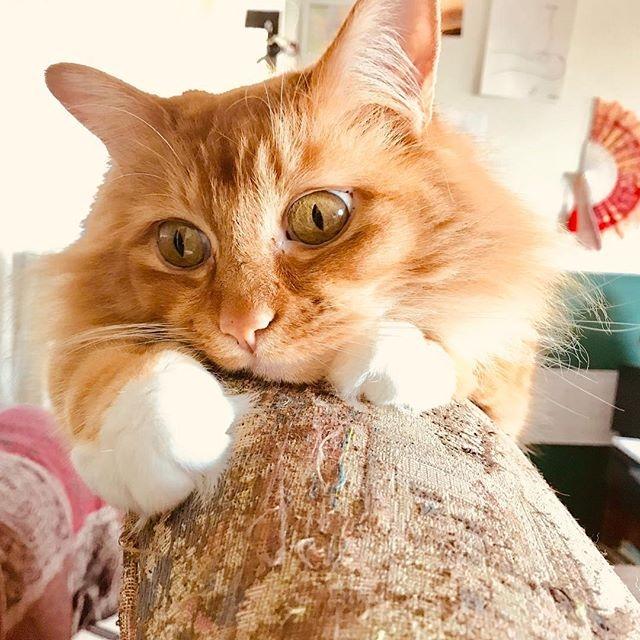 Bonus Cat Insta