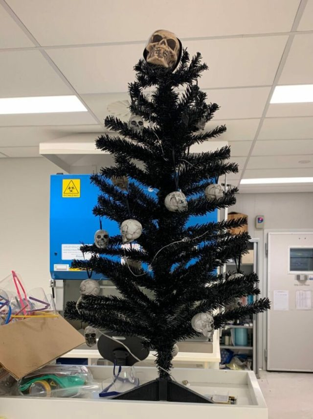 Christmas tree in the lab, decorated with skulls