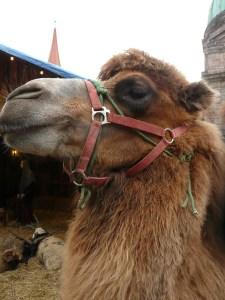Joe Camel!