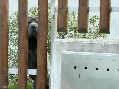 Hey!  He didn't bark; I just heard him rustling around.
