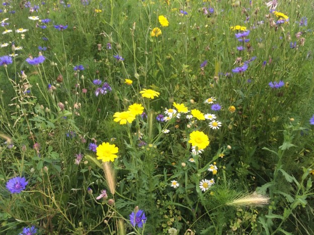 wild flowers in Lyon