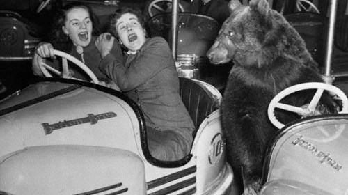 "18 Dec 1954, London, England, UK --- The driver of the ""bumpmobile"" at right ""bears"" left to avoid hitting two shrieking females at a London fun fair. ""Just a coupl'a human drivers,"" Susie the Bear remarks. The girls are Wynne Shearme (left), 23; and Marjorie Kennedy, 22. --- Image by © Bettmann/CORBIS"