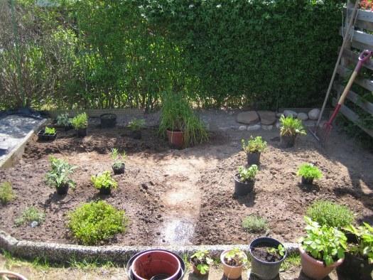Anlägga örtträdgård