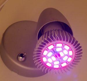 Rödblå ledlampa som växtbelysning