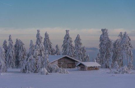 Hütte umgeben von Tannen Winter viel Schnee