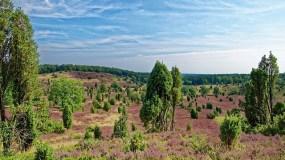 In der Lüneburger Heide geht es rauf und runter