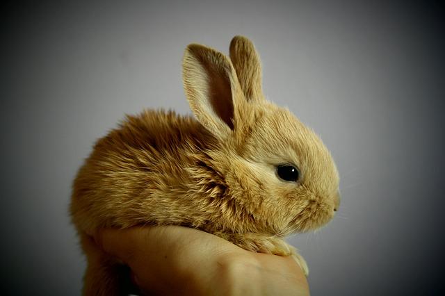ein kleiner süßer gelb, goldener Hase auf einer Menschenhand