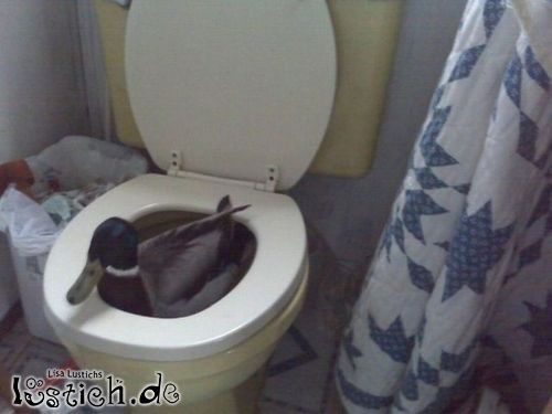 Hinten kackt die Ente