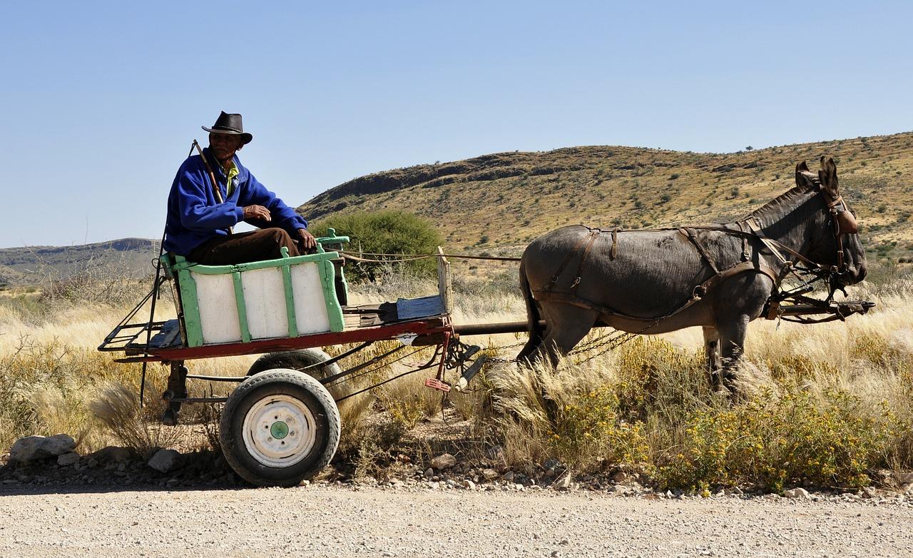Bauer auf einem Wagen mit Esel davor