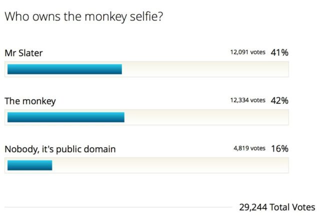 Who_owns_the_monkey_selfie__-_Results__poll_8229895_