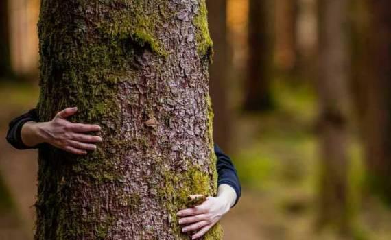 environmental belief green