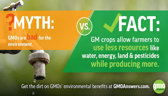 Why do some oppose GMO?