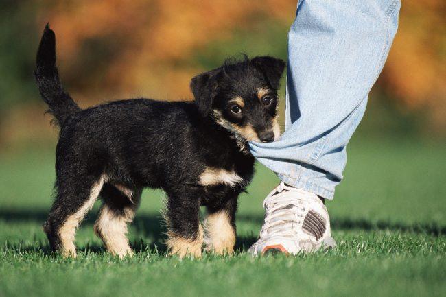 pet dog rescue