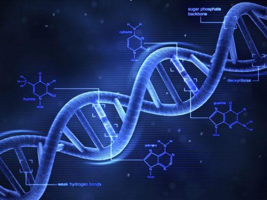 GMO DNA