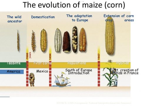 GMO vs non-GMO foods