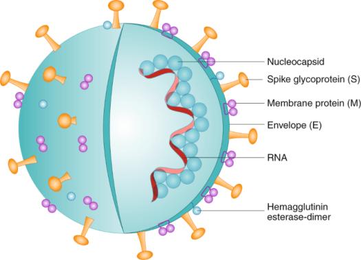 COVID-19 vaccine essentials