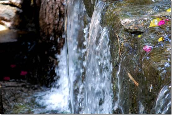 cohdranknwaterfallandleaves2