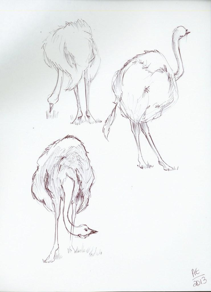 Ostrich Studies 1