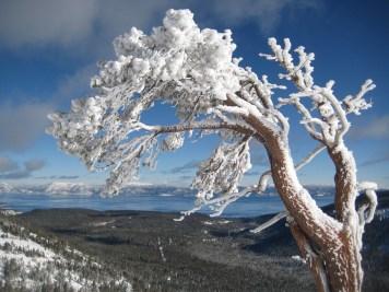 7-Jackie Laulainen_ Bluebird White Christmas