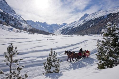 Engadin St. Moritz horse drawn sleigh ride