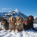 Crested Butte photo 4