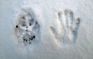 Banff Lake Louise grey wolf footprint