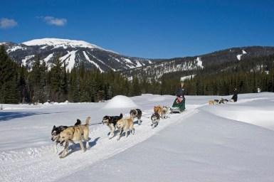 Sun Peaks dog sledding