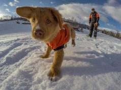 Even Coloradan avi puppies love the Broncos. | Photo: Aspen Snowmass