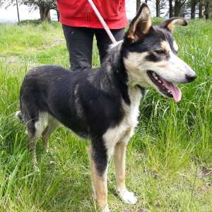 Skibbereen Animal Sanctuary & Rescue Centre - Toby
