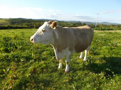 Skibbereen-Animal-Sanctuary-and-Rescue-Centre (132)