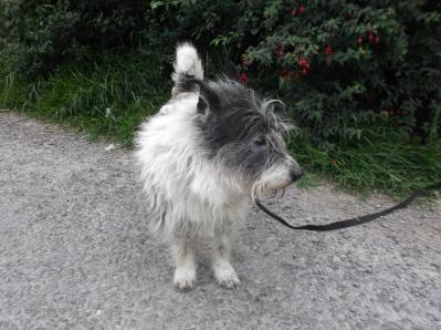 Skibbereen-Animal-Sanctuary-and-Rescue-Centre (149)