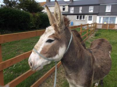 Skibbereen-Animal-Sanctuary-and-Rescue-Centre (165)