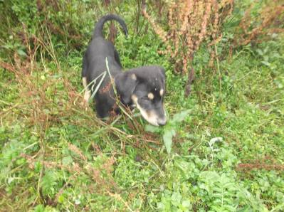 Skibbereen-Animal-Sanctuary-and-Rescue-Centre (174)