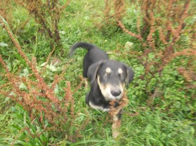 Skibbereen-Animal-Sanctuary-and-Rescue-Centre (187)