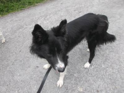 Skibbereen-Animal-Sanctuary-and-Rescue-Centre (190)