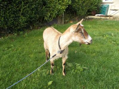 Skibbereen-Animal-Sanctuary-and-Rescue-Centre (217)