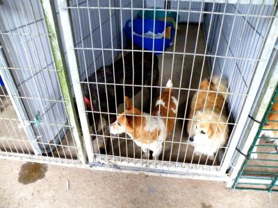 Skibbereen-Animal-Sanctuary-and-Rescue-Centre (240)