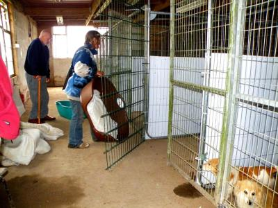 Skibbereen-Animal-Sanctuary-and-Rescue-Centre (241)