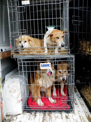 Skibbereen-Animal-Sanctuary-and-Rescue-Centre (243)