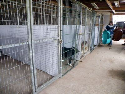 Skibbereen-Animal-Sanctuary-and-Rescue-Centre (244)