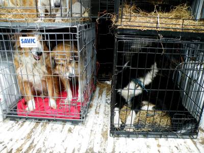 Skibbereen-Animal-Sanctuary-and-Rescue-Centre (254)