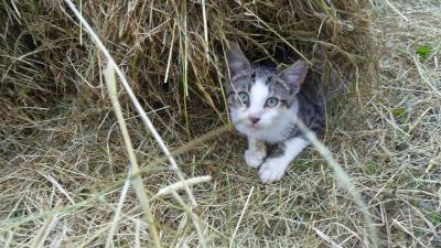 Skibbereen-Animal-Sanctuary-and-Rescue-Centre (261)
