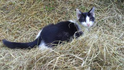 Skibbereen-Animal-Sanctuary-and-Rescue-Centre (262)