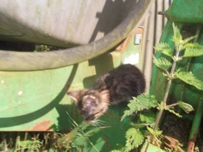 Skibbereen-Animal-Sanctuary-and-Rescue-Centre (28)