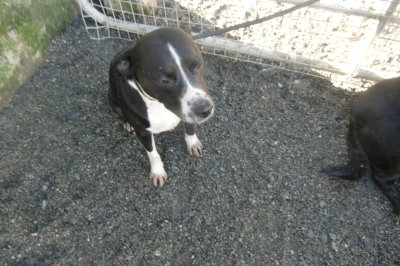 Skibbereen-Animal-Sanctuary-and-Rescue-Centre (283)
