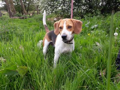 Skibbereen-Animal-Sanctuary-and-Rescue-Centre (311)