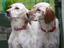 Skibbereen-Animal-Sanctuary-and-Rescue-Centre (328)